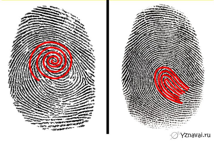 11 фактов об отпечатках пальцев, которые могут заставить вас смотреть на свои руки с большим вниманием