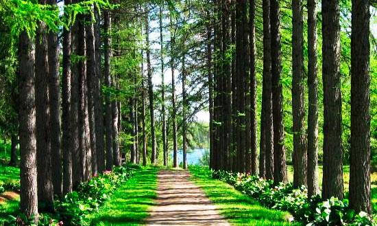 Соловецкий Ботанический сад