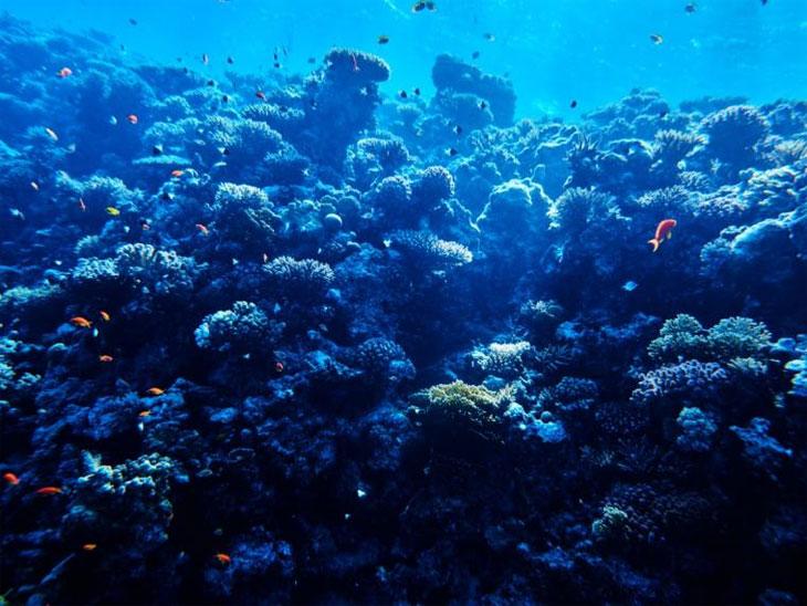 Форма морского дна