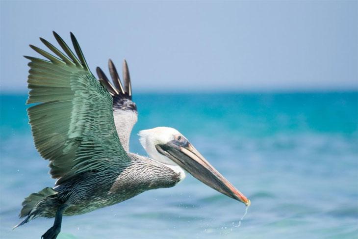 Мир, богатый птицами