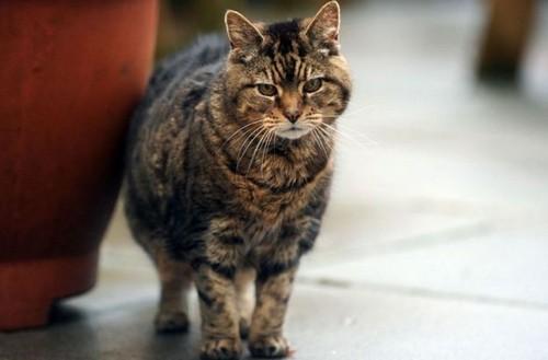 Признаки того, что кошка стареет