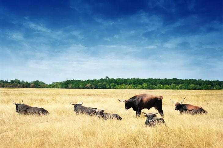 Национальный парк Хортобадь